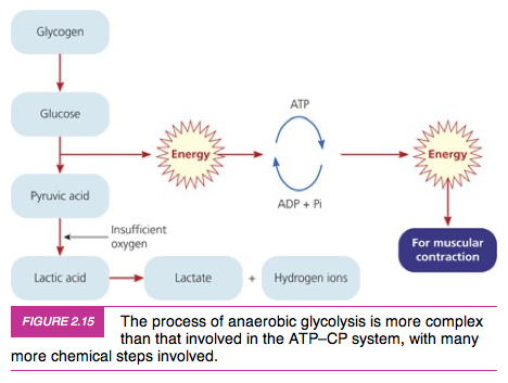 atp resynthesis energy systems Energy systems characteristics of the atp-cp system produces energy for atp resynthesis most rapidly relies on the muscular stores of.